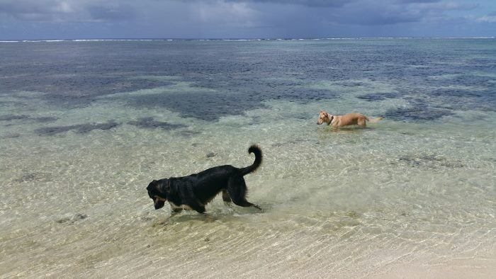 rarotonga dogs playing