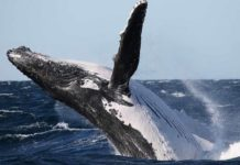 where to watch the whales