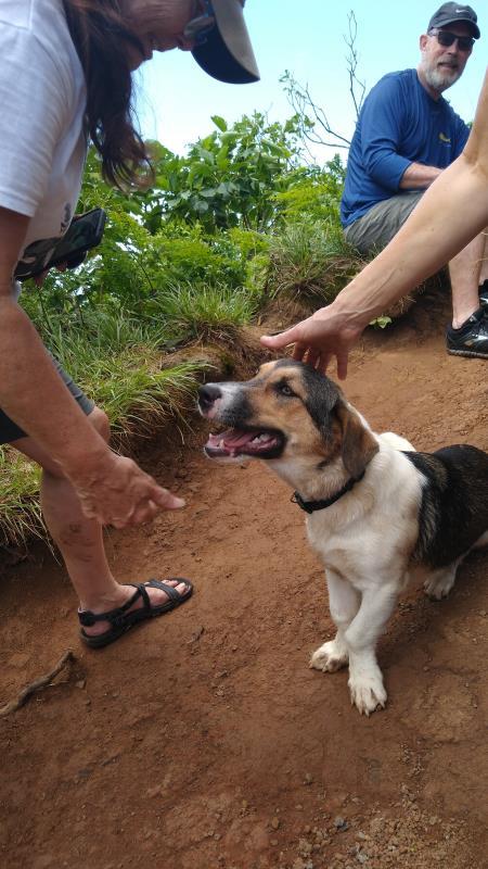 dog-lovers paradise in Rarotonga