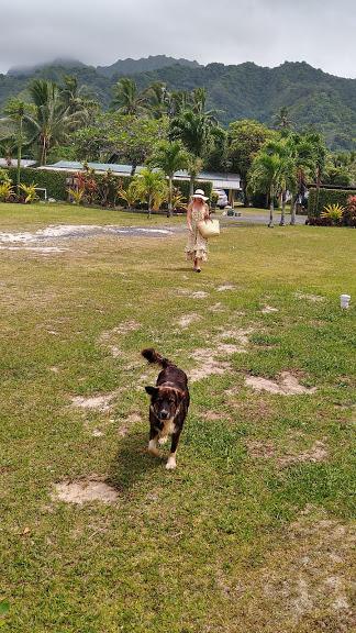 Rarotonga dog lovers paradise